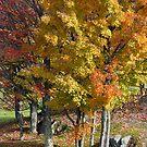 Autumn Trees A Blaze by Deborah  Benoit