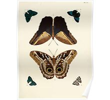 Exotic butterflies of the three parts of the world Pieter Cramer and Caspar Stoll 1782 V1 0243 Poster