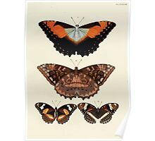 Exotic butterflies of the three parts of the world Pieter Cramer and Caspar Stoll 1782 V3 0101 Poster
