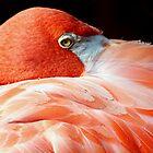 Flamingo by Loree McComb
