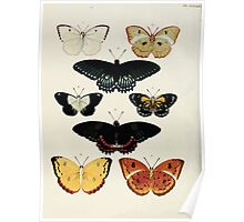 Exotic butterflies of the three parts of the world Pieter Cramer and Caspar Stoll 1782 V4 0292 Poster