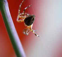 the master webs in red by LisaBeth