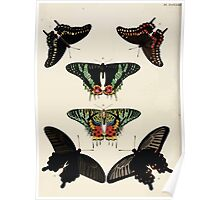 Exotic butterflies of the three parts of the world Pieter Cramer and Caspar Stoll 1782 V4 0394 Poster