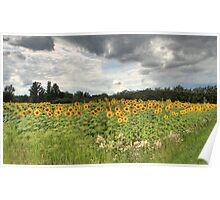 Dordogne Sunflower Field Poster