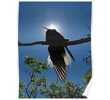 Backlit Noddy - Heron Island - Australia Poster