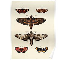 Exotic butterflies of the three parts of the world Pieter Cramer and Caspar Stoll 1782 V3 0203 Poster