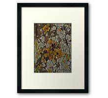 I'm Lichen this  Framed Print
