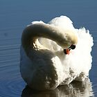 Morning beauty (Mute swan) by JanSmithPics