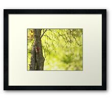 red bud Framed Print