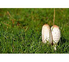 Ink cap fungi Photographic Print