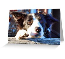 Can I Come Too Greeting Card