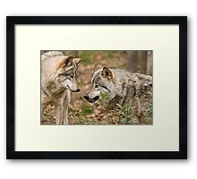 A little Trouble Brewing! Framed Print