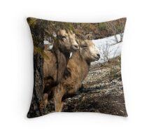 Ewe Spy - Banff National Park  Throw Pillow
