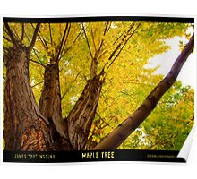 Maple Tree - Poster Poster