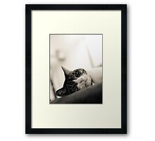 Lucy looks....... Framed Print