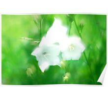 Three flower bell Poster