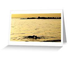 dogs playing in the water Greeting Card