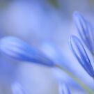 Blue is love, flowers by Kornrawiee