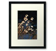 Last Light on Molonglo  Framed Print