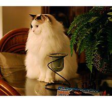 Fat Cat! Photographic Print