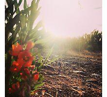 Orange Wildflowers Along the Dirt Path Photographic Print