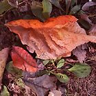 Man On the leaf by Linda Miller Gesualdo