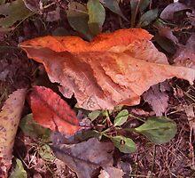 Man On the leaf by Linda Miller Gesualdo