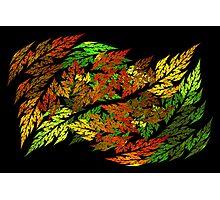 Autumn Leaves in Harmony Photographic Print