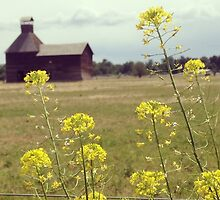 Yellow Wildflowers with Barn in the Distance  by JULIENICOLEWEBB