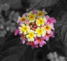 Vibrant Colors with b&w background  by loriwellsphoto