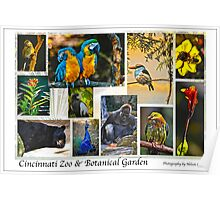 Cincinnati Zoo Collage Poster