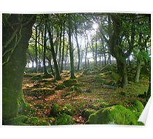 Cornwall: Autumnal Glade Poster