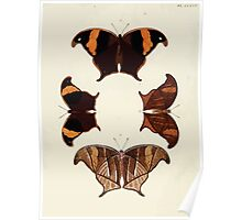 Exotic butterflies of the three parts of the world Pieter Cramer and Caspar Stoll 1782 V4 0030 Poster