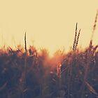 Autumn Sunset Haze by JurrPhotography