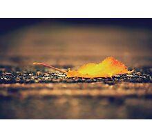 Little Leaf Photographic Print