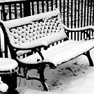 My Winter's Beauty!!! ©  by Dawn M. Becker