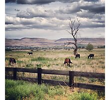 Snag Tree in a Pasture with Horses  Photographic Print