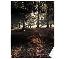 Forest Morn Poster