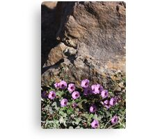 Bindweed Blossoms Canvas Print