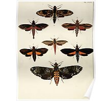 Exotic butterflies of the three parts of the world Pieter Cramer and Caspar Stoll 1782 V4 0054 Poster