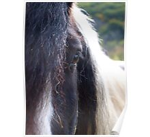 Gypsy Vanner Mare Poster