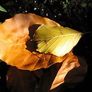 Russet Autumn Leaves - Close-up by BlueMoonRose