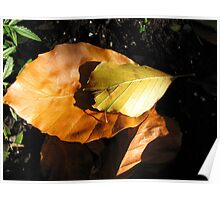 Russet Autumn Leaves - Close-up Poster