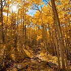 Golden Leaves by Reese Ferrier