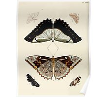 Exotic butterflies of the three parts of the world Pieter Cramer and Caspar Stoll 1782 V1 0314 Poster