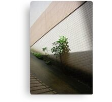 Nature's struggle with man 2 Canvas Print