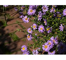 Prescott Garden Photographic Print