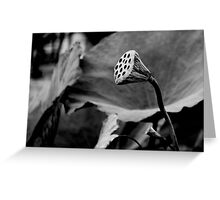 Lily Pad Greeting Card