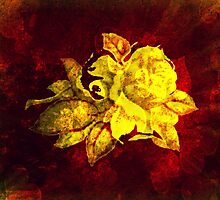 Big yellow rose on burgundy dark red  by ankka