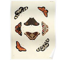 Exotic butterflies of the three parts of the world Pieter Cramer and Caspar Stoll 1782 V1 0153 Poster